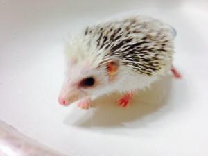 Sonic taking a bath!